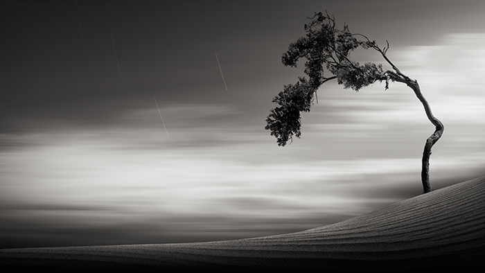 """adagio"" © kevin saint grey This image is my favorite landscape image in my portfolio. It's not because I consider it the most beautiful but because it took over a year to get an image I liked from this location. When I first found this tree, I knew I wanted to photograph it but something always seemed to go wrong -- breezes would shake the tree, clouds wouldn't move in the correct way, footsteps in the sand, etc. I must have taken fifty to sixty images of this tree over dozens of visits. It was frustrating but finally getting this image made it worth it."