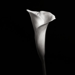 Flower Study IV (C) Joel Tjintjelaar