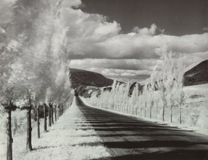 Road and Poplar Trees, Minor White 1955