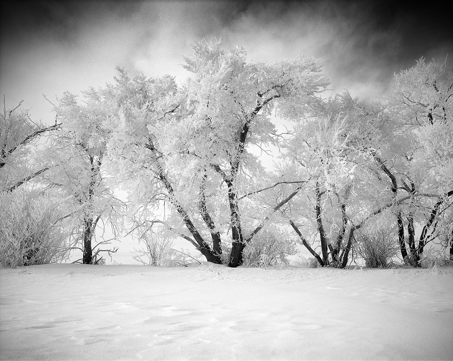 """Ice Covered Trees"" (c) Olivier Du Tré"