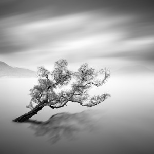 """Water Tree 5"" (c) Moises Levy"