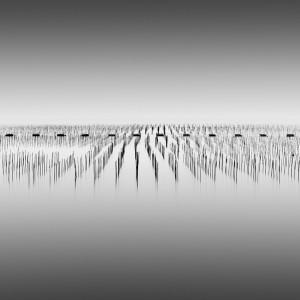"""""""Bamboo Army"""" (C) Gavin Dunbar"""