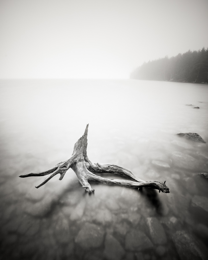 """""""Eagle Lake Driftwood"""" (c) Nate Parker"""
