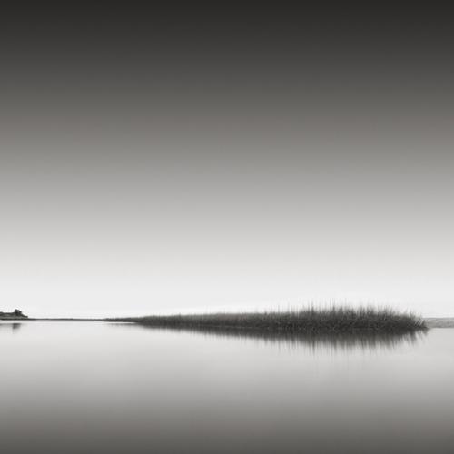 """""""Reeds"""" (c) David Fokos"""