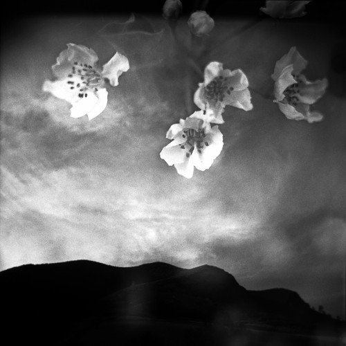 """This moment always (c) j. m. golding I chose """"This moment always"""" as an example of my series, """"Where you are"""" (https://www.jmgolding.com/where-you-are/). This series explores the integration of closeness and distance using double exposure. The photographs contain elements of each of the two exposures, one focused close and one focused far away, fusing them to create an image that couldn't have been anticipated by either one alone. They join near and far, solid and ethereal, objective and subjective, sharp and blurred, literal and metaphorical, real and imagined. I made """"This moment always"""" using two cameras, a Holga 120N and a vintage Mamiyaflex C2, on Fuji Neopan Acros film. First I made an exposure of the distant landscape using the Holga. After exposing the entire roll of film, I rewound it and loaded it into the Mamiyaflex, and made a close-up exposure of the pear blossoms at f 2.8 for 1/100 second. I developed the film in Adonal (Rodinal) diluted 1+100 for 18 minutes. Post processing of the scanned negative consisted of contrast adjustments, dodging and burning, and dust removal."""